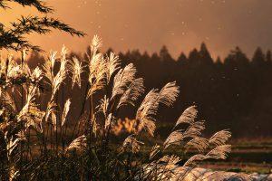 優秀賞_遠山勝行様秋の夕日に照る